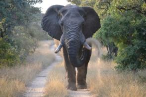 elephanttt