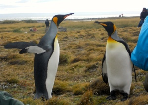 chile_penguins